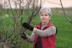 Женщины подрежа яблоню в саде Стоковые Фото