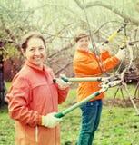 2 женщины подрежа яблоню Стоковое фото RF