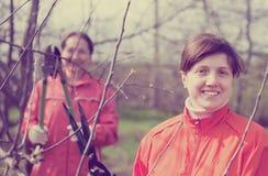 Женщины подрезая фруктовое дерев дерево в саде стоковое изображение rf