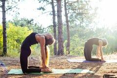 2 женщины практикуя йогу в древесине Стоковые Фото