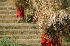 женщины пшеницы износа перлы собрания Стоковое Изображение RF