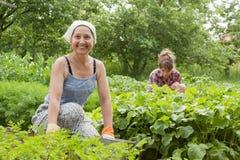 Женщины работая в огороде стоковые фото