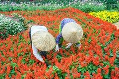 2 женщины работая в саде, Ханое Стоковые Фото