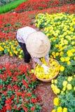 Женщины работая в саде, Ханое Стоковое Изображение RF