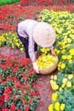 Женщины работая в саде, Ханое Стоковые Изображения