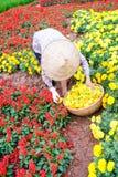 Женщины работая в саде, Ханое Стоковые Изображения RF