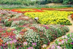 Женщины работая в саде, Ханое Стоковая Фотография