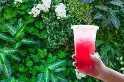 Женщины регулируют держать пластичную соду воды со льдом чашки красную итальянскую на зеленой природе стоковые фото