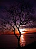 женщины романтичного захода солнца людей вечера солнца Стоковая Фотография RF