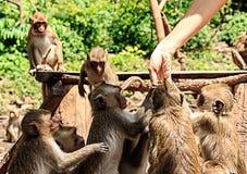 Женщины руки дают еду Стоковое Фото