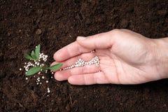 Женщины удабривать завод в почве Садовничая сезон стоковые изображения rf