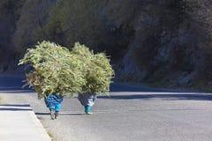 2 женщины фермера нося нагрузку ветвей. Стоковая Фотография RF