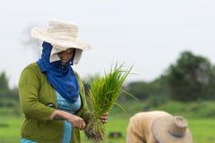 Женщины фермера Стоковые Изображения