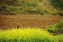 Женщины этнического меньшинства в поле канола Стоковое Изображение