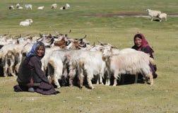Женщины Tso Moriri кочевнические Стоковая Фотография RF