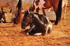 Лошадь Навайо Стоковая Фотография