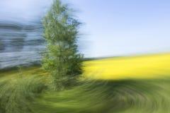 Жестикулируйте запачканную предпосылку фото дерева с желтым полем и голубым небом на заднем плане Стоковое Изображение RF