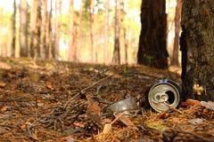 Жестяная коробка и стеклянная бутылка на траве в сосновом лесе Стоковое фото RF