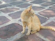 Жест желтого цвета 1 кота Стоковое Изображение