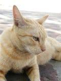 Жест желтого цвета 3 кота Стоковая Фотография RF