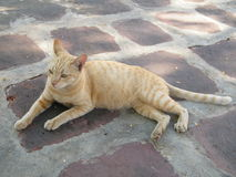Жест желтого цвета 6 кота Стоковые Изображения