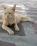 Жест желтого цвета 7 кота Стоковые Фото
