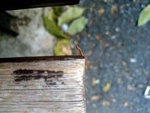 Жест червя Стоковое фото RF