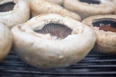 жечь грибы Стоковая Фотография