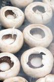 жечь грибы Стоковое Изображение