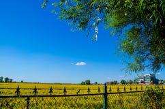 Железная загородка вокруг рисовых полей Стоковые Изображения