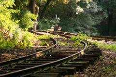 Железная дорога Forrest Стоковые Изображения RF
