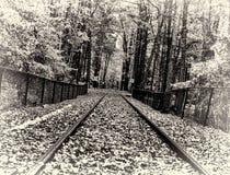 Железнодорожные пути Стоковые Фото