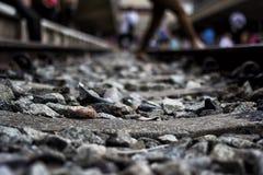 Железнодорожный вокзал Tanjong Pagar, Сингапур Стоковая Фотография RF