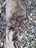 Железнодорожный слипер Стоковое фото RF