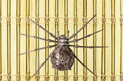 Железные марионетки паука Стоковые Изображения