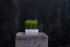 Железный бак с зеленой травой на темной предпосылке Стоковая Фотография RF