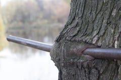 Железный ствол дерева вступления Стоковое Изображение