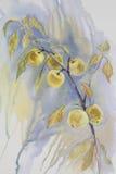 Желтая акварель ветви яблок Стоковые Изображения