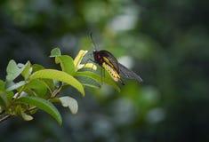 желтая бабочка стоковое фото