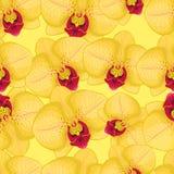 Желтая безшовная предпосылка с желтыми орхидеями Стоковая Фотография RF