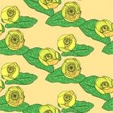 Желтая Вод-лилия Стоковые Изображения