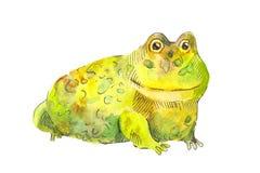 Желтая жаба Жаба Funnyyellow Большая лягушка в акварели Стоковые Фотографии RF