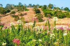Желтая земля травы с ясным голубым небом на свете полдня дня Стоковое Изображение RF