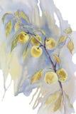 Желтая изолированная акварель ветви яблок Стоковая Фотография RF