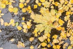 Желтая листва осени на воде Стоковая Фотография RF
