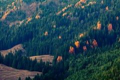 Желтая и зеленая листва Стоковые Изображения RF