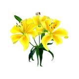 Желтая иллюстрация притяжки руки лилии стоковые фотографии rf