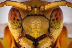 Желтая оса Selfie Стоковые Фотографии RF