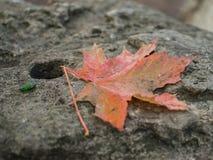 Желтая осень Стоковые Фотографии RF