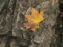 Желтая осень Стоковое Изображение RF